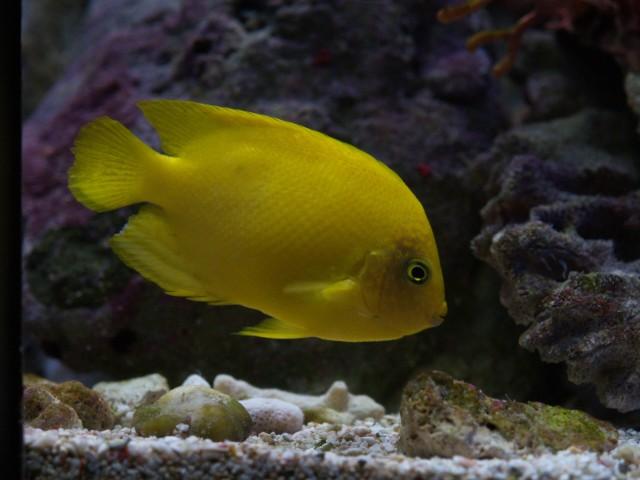 美ら海 2階 サンゴ礁の小型生物